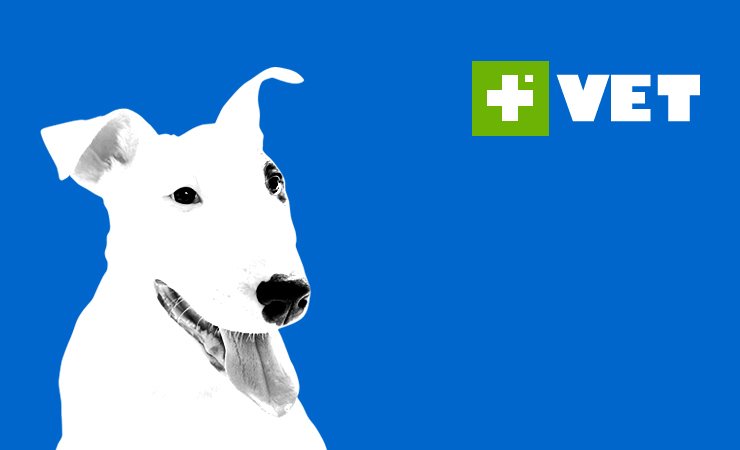 Logo Design - Farma Vet