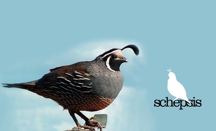 Logo Design - Schepsis